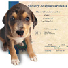 Dog Genealogy Kit